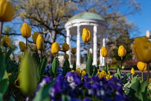 Tulips and the Old Well